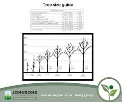 Tree Root Size Chart Tree Size Guide Commercial Nursery Johnsons Of Whixley