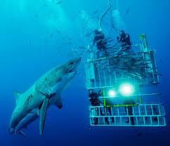 real underwater titanic pictures.  Underwater Underwateranimalsshark_picturescollections On Real Underwater Titanic Pictures