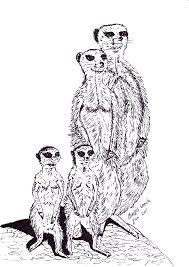 Pentekening Van Stokstaartjes Getekend Door Brigit Weeda