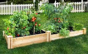 box garden. Raised Vegetable Garden With Wood Box