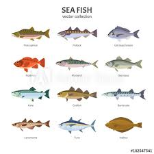 Rockfish Identification Chart Sea Fish Set Vector Illustration Of Different Types Of