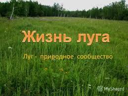 Презентация на тему Луг природное сообщество На лугу может  Луг природное сообщество Что несеяно родится От ветра голову склоню Но почему
