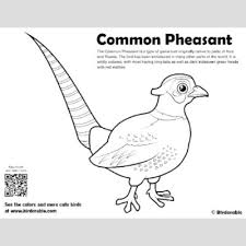 Color pictures, email pictures, and more with these birds coloring pages. Cute Bird Coloring Pages By Birdorable Free Downloads