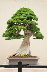 Image result for bonsai tree symbolism