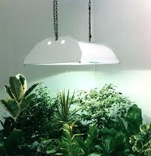 artificial sunlight lamp for plants pretzl me in sun design 12
