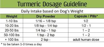 Turmeric Dosage For Dogs The Definitive Guide