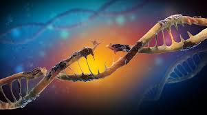 Chromosome Mutations - II - Biology Online Tutorial