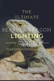 the ultimate bearded dragon lighting guide