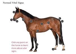 Miniature Horse Weight Chart Adult Horse Weight Calculator The Horse