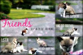 Quotes About Pets And Friendship Awesome Quotes About Pets And Friendship Cool Dog Friendship Quote Amazing
