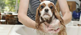 how to give your dog a bath in the sink