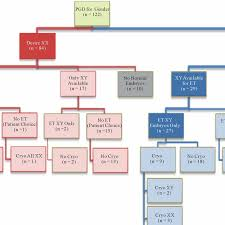 Gender Selection Patient Decision Tree Xx Female Xy