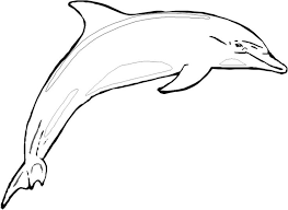 Printable Dolphin Coloring Pages Coloringstar