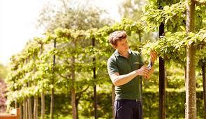 Online Garden Design Courses Inspiration Horticulture Askham Bryan College