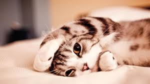 hd pictures of cute animals. Delighful Pictures 60 Beautiful And Cute Animal Wallpapers Inside Hd Pictures Of Animals
