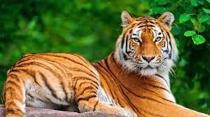Wild Animals Wallpapers HD ...
