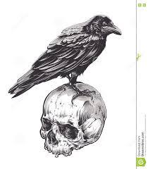 ворона на черепе иллюстрация вектора иллюстрации насчитывающей