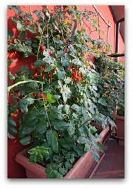 Container Gardening Tomatoes Video  Home Outdoor DecorationContainer Garden Plans Tomatoes