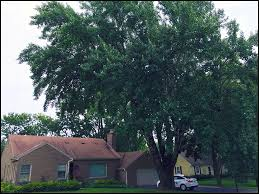 Tree Risk Assessment A Case Study