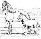 Paarden Kleurplaten Gratis Printbare Kleurplaten