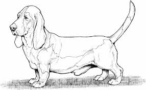 Small Picture Page Free Printable Pages And Cat Getcoloringpagescom Dog Dog