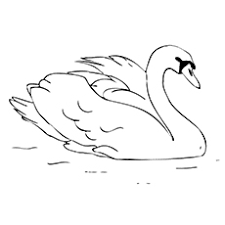Small Picture Top 10 Swan Coloring Pages For Your Little Ones