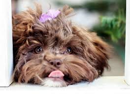 yeast infections in dogs how to treat