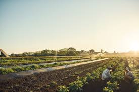 organic agriculture may reduce greenhouse gas emissions new study shows