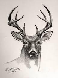 Cool Abstract Animal Drawings And Animal Drawing