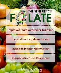 The 14 Best Folate Rich Foods To Consume Drjockers Com