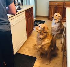 still just as eager for their delicious food