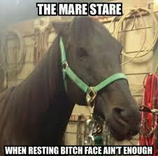 Image result for horse bitch meme