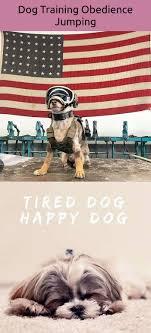 Jumping Dog Design Dogs Design No Bake Dog Treats Pinterest Dogs Dog