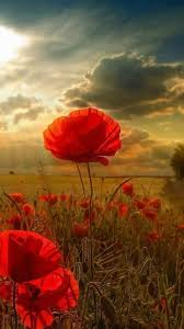 best anzac day images iers forget and military essay for remembrance day poppy an essay or paper on remembrance day on remembrance day we wear the poppy a blood red flower which grew in the fields