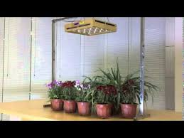 lighting indoor plants. led grow lights for indoor plants and plant lighting i