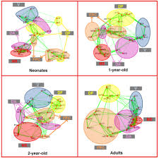 brain functional networks in the