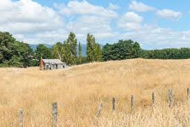 tall green grass field. Little Old House In Golden Field Dry Grass Surrounded By Tall Green Trees. Stock Photo Y