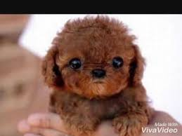 cute puppies and kittens. Plain Puppies CUTEST KITTENS AND PUPPIES EVER And Cute Puppies Kittens