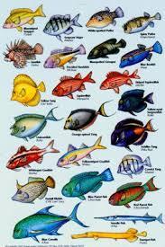Oahu Fish Chart Star 9 Oahu