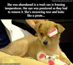 Rescue Dog Quotes Cool The Cutest Rescued Dog Funny Pictures And Quotes