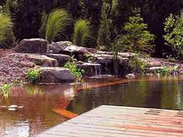 Natural looking in ground pools Self Cleaning Image Swimmingpoolcom Natural Pools Natural Swimming Pools And Ponds