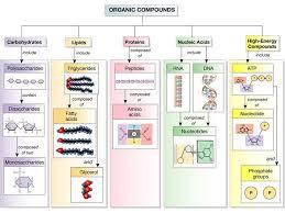 Honors Biology Macromolecules Diagram Quizlet