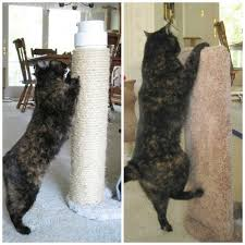 Review Furniture Protector Cat Scratcher by Kool Kitty Toys The