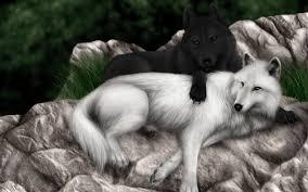 black wolf and white wolf love. Contemporary White Blackwolfandwhitewolf1118131920x1200jpg Intended Black Wolf And White Love