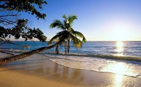 background images for desktop beaches. Brilliant Background A Palm Tree On The Beach For Background Images Desktop Beaches W
