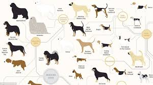 dog breed size chart the family tree of dogs infographic reveals how every breed is