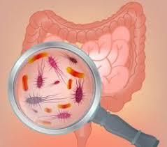 Darmflora gestört symptome
