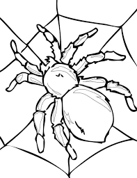 Small Picture Tarantula on His Spider Web Coloring Page NetArt