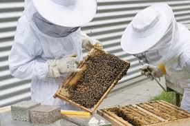 Αποτέλεσμα εικόνας για beekeeper