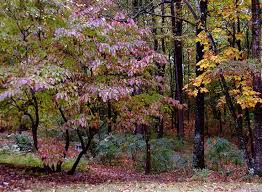 Small Picture 31 best Woodland Garden Ideas images on Pinterest Woodland